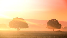 tänder gammala trees Royaltyfri Fotografi