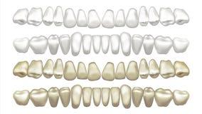 Tänder som gör vit vektorn För och after Tandfanérblekmedel isolerad knapphandillustration skjuta s-startkvinnan vektor illustrationer