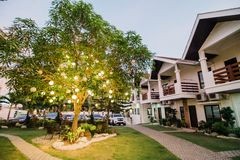 Tänt träd på semesterorten royaltyfri bild