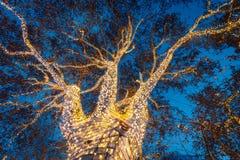 Tänt utsmyckat träd i mitt av Rathausplatzen royaltyfri foto