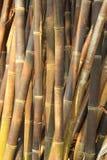 Tät bambu i trädgården Royaltyfri Fotografi