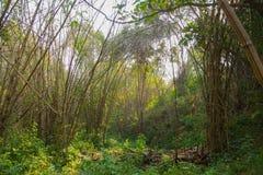 Tät blandad skog Arkivbild