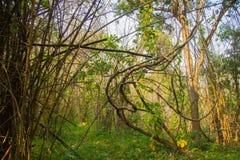 Tät blandad skog Royaltyfri Foto