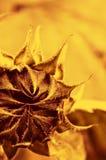 tät blomma som skjutas upp arkivbilder
