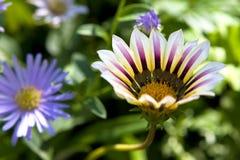 tät blomma upp Royaltyfria Foton
