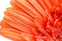 tät blomma upp Royaltyfri Foto