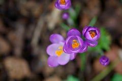 tät blomma upp Fotografering för Bildbyråer