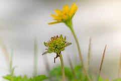 tät blomma upp yellow Royaltyfri Foto