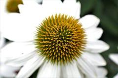 tät blommafjäder upp Royaltyfria Foton