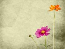 tät blommapapperstextur upp Royaltyfri Bild