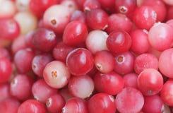 tät cranberry upp royaltyfria bilder