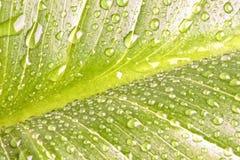 tät dagg tappar upp den gröna leafen Royaltyfria Foton