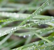 tät dagg tappar upp nytt gräs Royaltyfria Foton