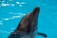 tät delfin upp Royaltyfri Foto