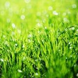 tät extrem gräsgreen upp Royaltyfria Foton
