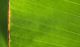 tät extrem grön leaf upp Fotografering för Bildbyråer