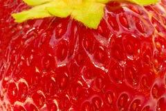 tät extrem jordgubbe upp Royaltyfri Foto