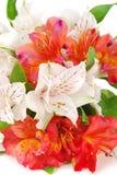 tät färgglad blommamixsommar upp Royaltyfria Bilder
