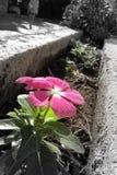 tät färgrik blomma upp Arkivfoton