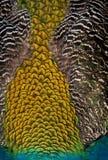 tät fjäderpåfågel för bakgrund royaltyfria foton