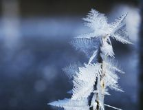 tät frost upp Fotografering för Bildbyråer