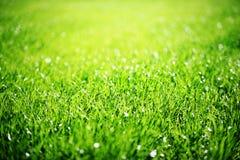 tät gräsgreen upp Arkivbilder