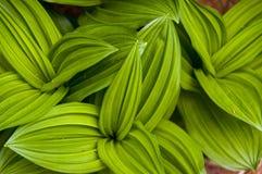 tät grön leaf upp abstrakt bakgrund Royaltyfri Foto