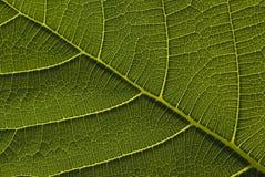 tät grön leave upp Arkivfoto