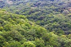 Tät grön sikt för skog uppifrån royaltyfri foto
