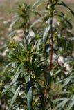 tät grön växt upp royaltyfria bilder