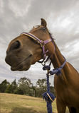 tät häst upp Arkivbild