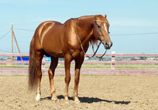 tät häst upp Royaltyfri Fotografi