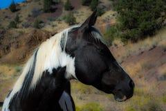 tät häst upp Arkivfoto