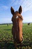 tät häst upp Royaltyfri Bild