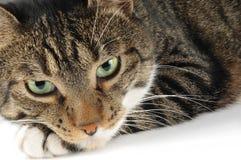 tät hemhjälp för katt upp Arkivbilder