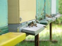 tät ingång för bikupa upp Royaltyfria Bilder