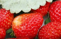 tät jordgubbe upp Arkivbilder