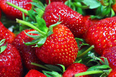tät jordgubbe upp Royaltyfri Foto