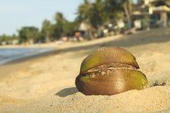 tät kokosnöt för strand upp royaltyfria foton