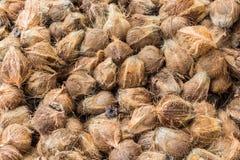 tät kokosnötgrupp upp Royaltyfria Bilder