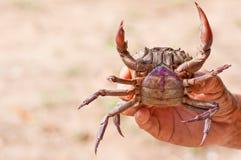 tät krabba skjuten mage upp Arkivfoton