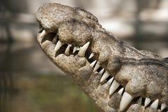 tät krokodilhuvudsideview upp Arkivfoton