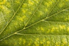 tät leaf som skjutas upp arkivfoton