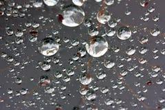 tät liten droppeleaf upp vatten Royaltyfria Bilder