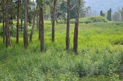 Tät natur i en skog Royaltyfria Bilder