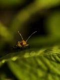 tät natur till Fotografering för Bildbyråer