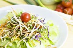 tät ny sallad upp grönsaker royaltyfria bilder