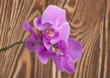tät orchidpurple upp Royaltyfria Bilder