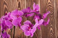 tät orchidpurple upp Royaltyfri Bild
