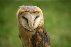 tät owl för ladugård upp Royaltyfri Foto